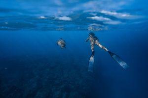Trend Alert : Under the Sea