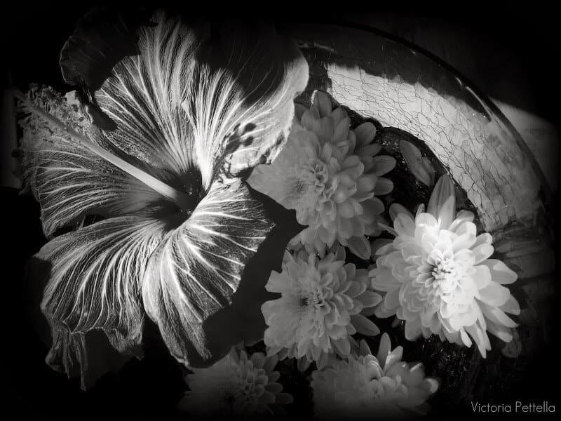 Fresh Photography: The Mystical World of Victoria Pettella