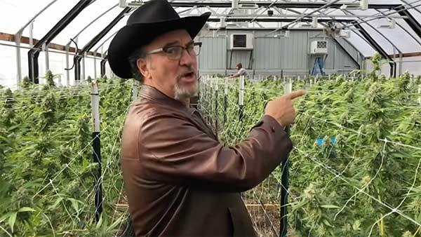 Jim Belushi Cannabis Farm
