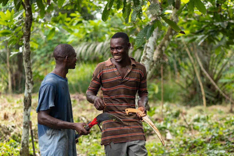 Dr. Bronner's Transforms Cocoa Industry with Fair Trade Regenerative Chocolate