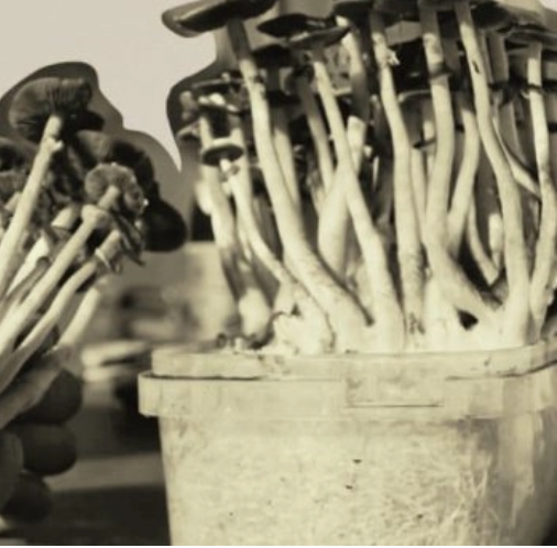 Why You Should Grow Your Own Mushrooms