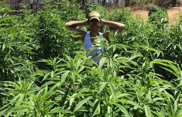 TiYanna Long Brings Social Impact: Women in Cannabis
