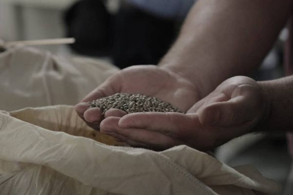 How to Plant Cannabis Seeds Indoors