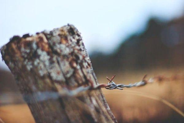 Center For Biological Diversity Demands Conservation of the Borderlands