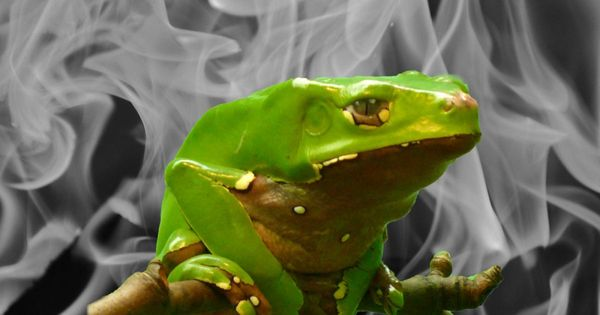 Kambo: Is Burning Frog Venom into Your Skin a Wonder Cleanse or Risky Procedure?