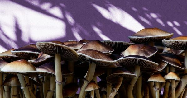 Why are Shrooms Illegal?