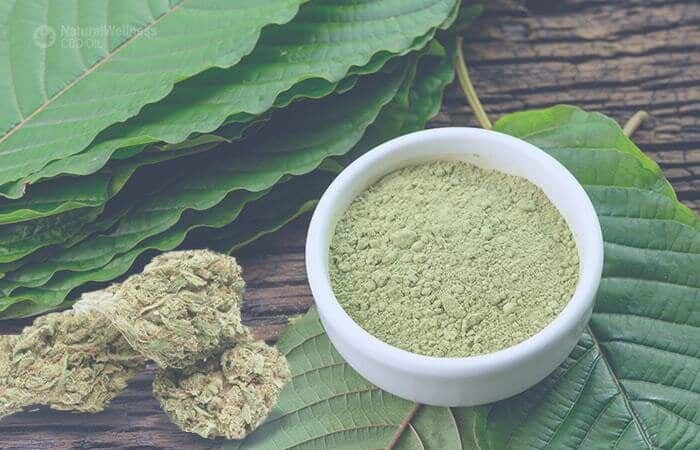 Kratom or CBD for Anxiety: Comparing Two Popular Natural Remedies