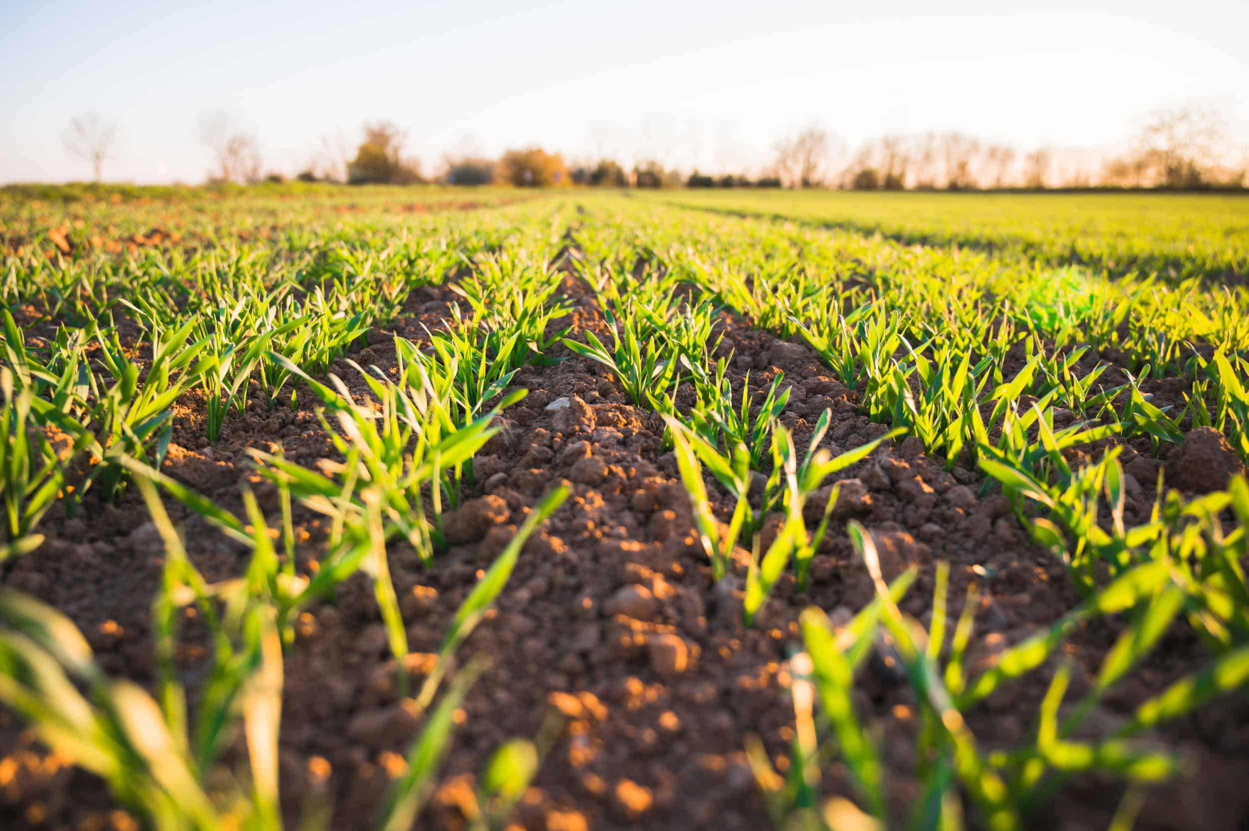 There Is Healing in the Soil: A Reflection on Being Black in Agriculture