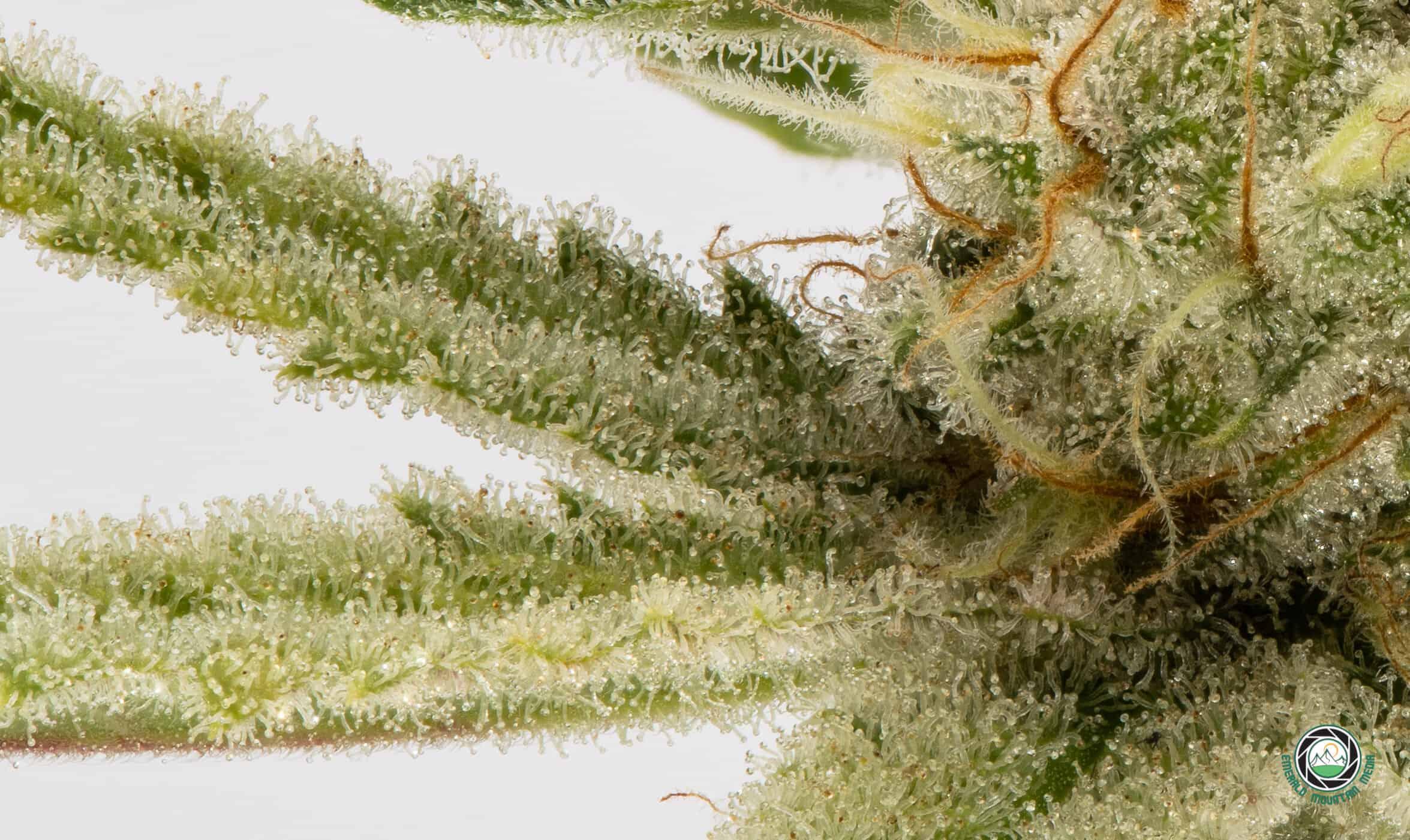 Money & Marijuana: An Introduction to Green Chi