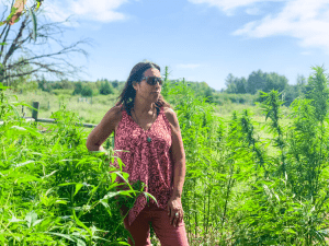 My Courtship of Cannabis