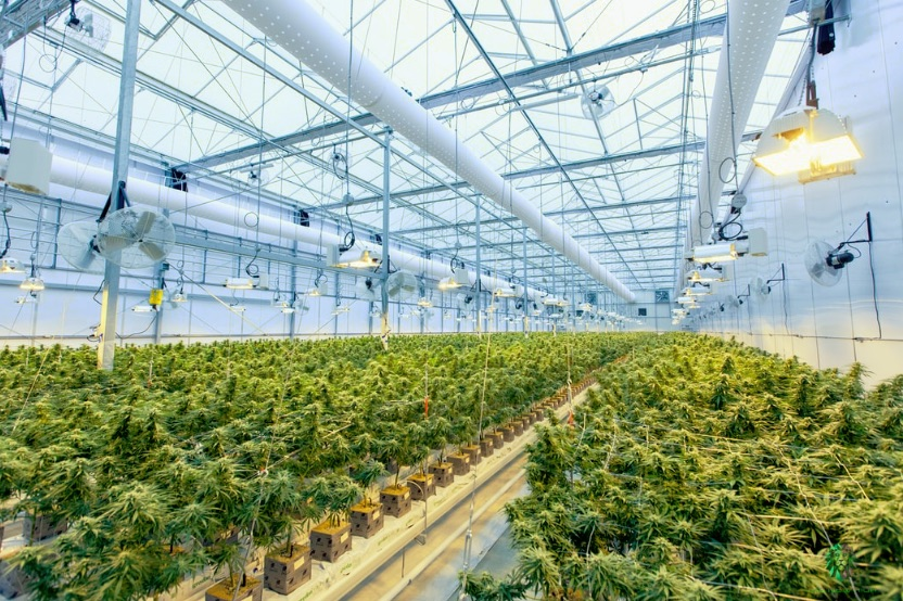 The 7 Major Impacts of COVID-19 on the Cannabis Industry